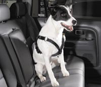 Canine Seat Belt System