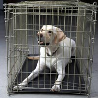 Canine travel crate