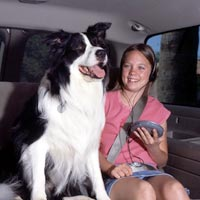 Plan your road trip with pets