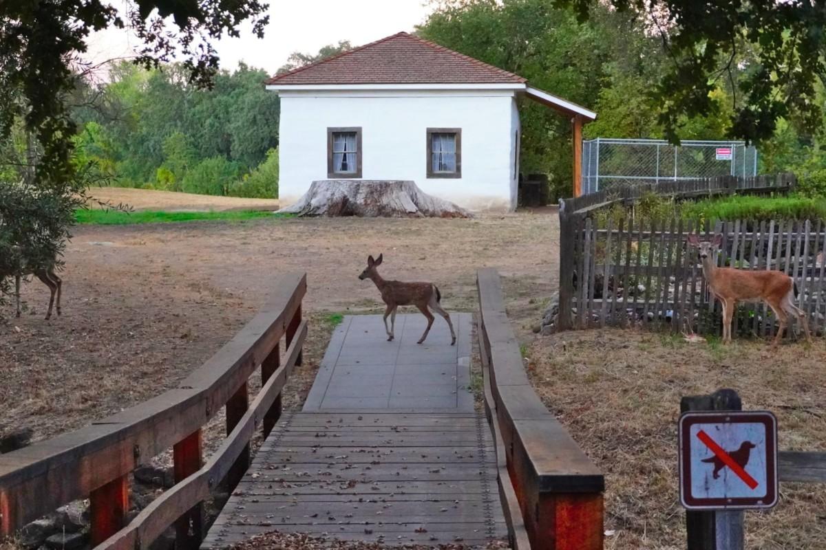 William B Ide Adobe State Historic Park