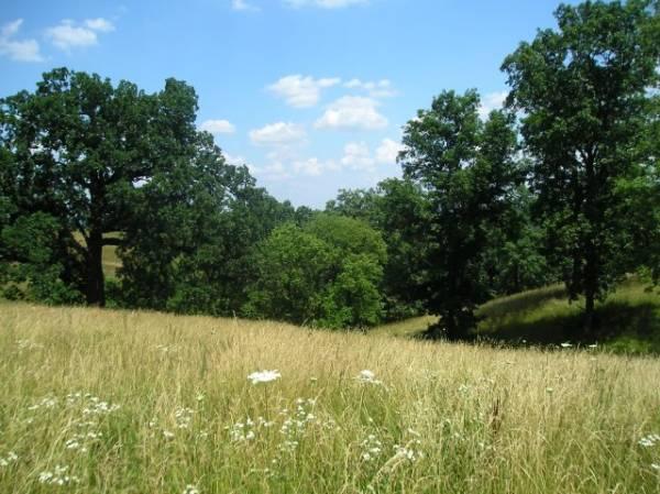 Missouri Country View