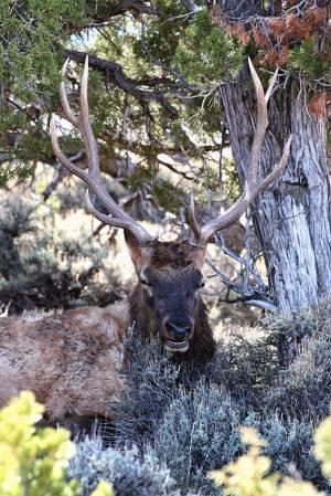 Jackson Hole Wyoming to Williams AZ