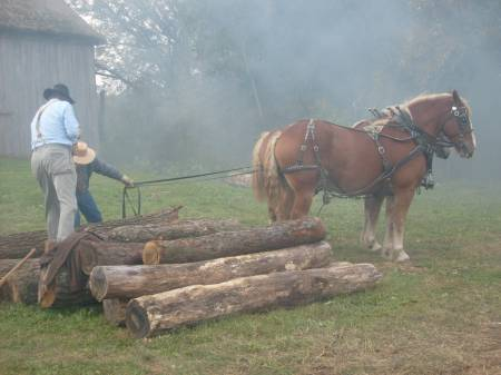 Horse team getting ready to haul logs