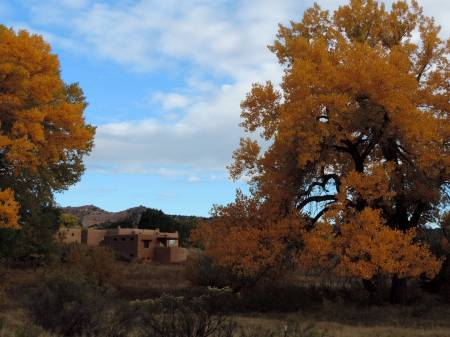 Fall cottonwoods - NM