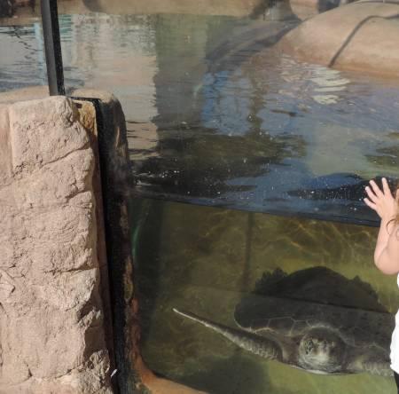 Sea Turtles Chula Vista