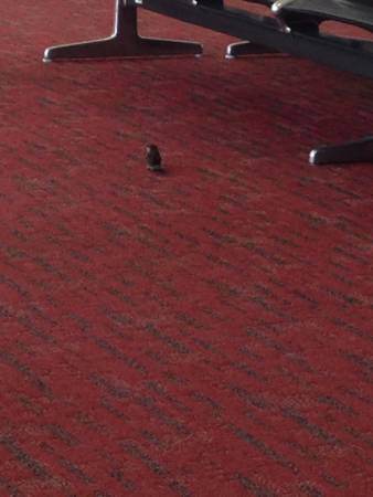 Bird watching at Denver Airport