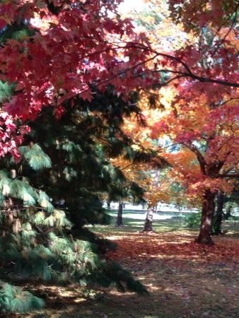 DC. Fall colors