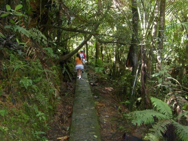 Mt. Britton Hiking Trail, El Yunque National Forest