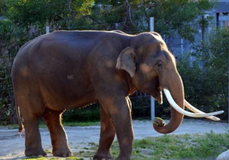 Elephant -- LA  Zoo