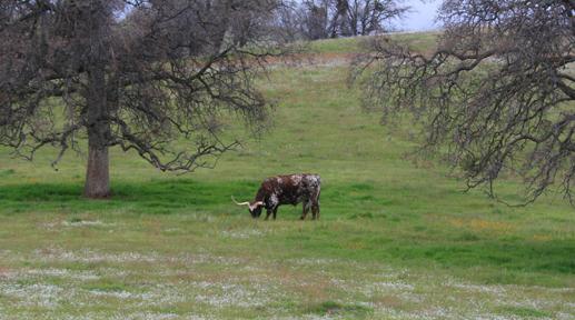 Walker Pass, March 2006