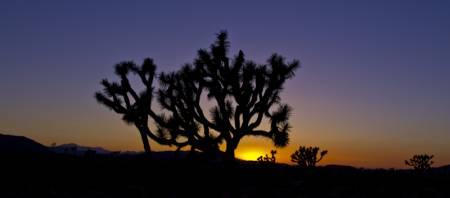 Sunset at Joshua Tree NP