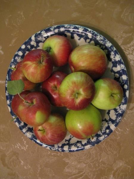 Georgia's Early apples