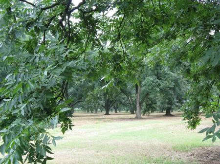 Georgia pecan groves are often found along the roadsides