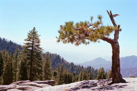 Beetle Rock, Sequoia National Park