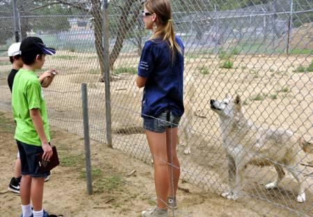 New Mexico Wolf Rescue (Bruzenak)