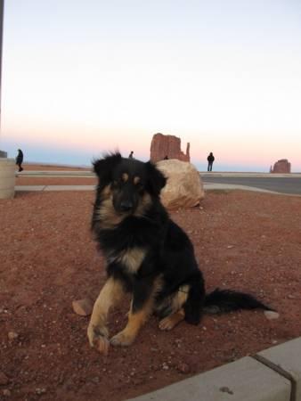 Wild dog with lame paw