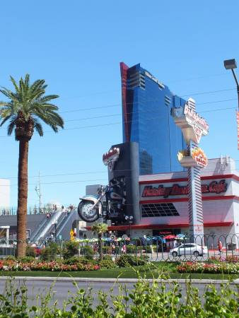 Harley D in Vegas.