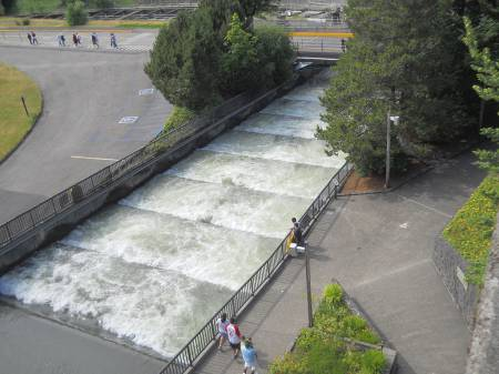 Fish Ladders at Bonneville Dam