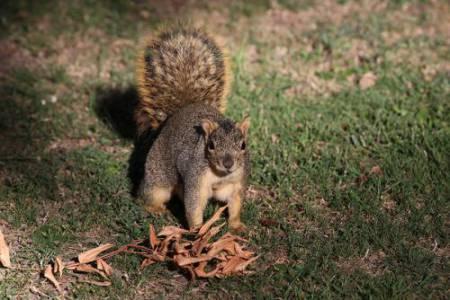 5_Squirrel