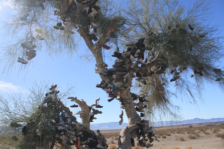 The Amboy Shoe Tree