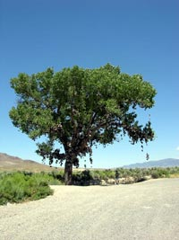Shoe Tree on US Highway 50 in Nevada