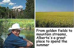 Alberta in Summertime